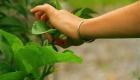 1-Cueillette-plante-sauvage